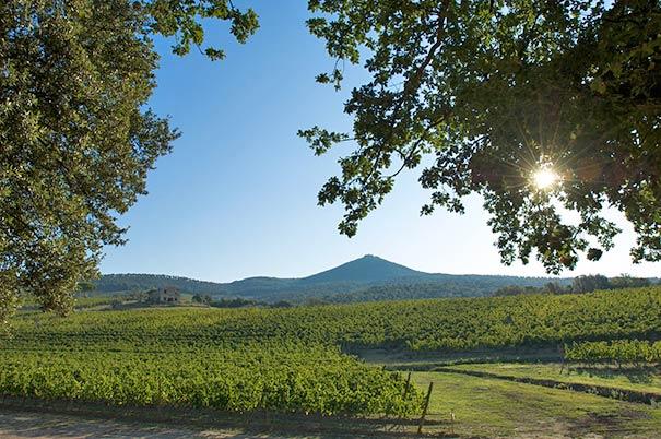 Urlaub für Weinkenner in Castagnetto Carducci