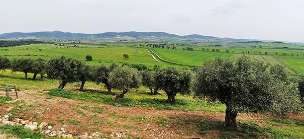 Blick über die Maremma nahe bei Talamona