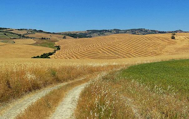 Landschaft bei Castiglione d'Orcia