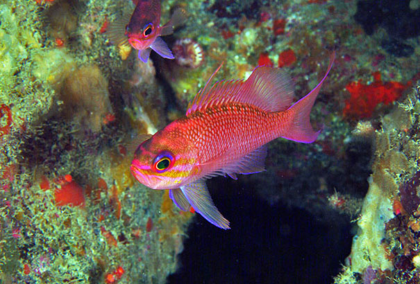 Unterwasserwelt von Giglio