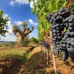 Herbsturlaub in der Toskana