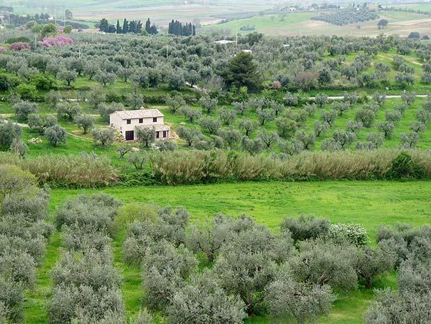 Landschaft der Maremma bei Magliano