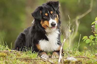 Ferienhaus in der Toskana für Urlaub mit Hund finden