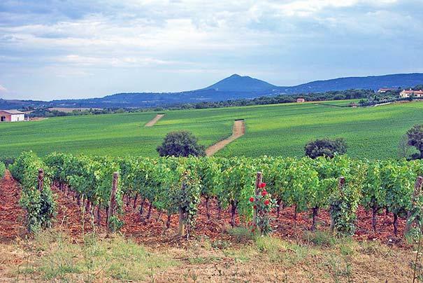 Weingut im Val d'Orcia mit Monte Amiata im Hintergrund