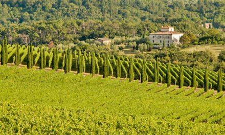 Weinanbau, Weintouren und Weinfeste im Chianti