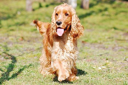 Ferienhäuser für Urlaub mit Hund in Castiglione della Pescaia