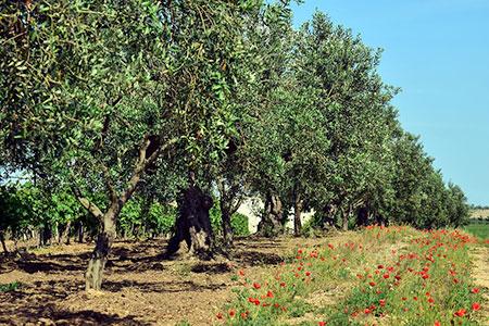 Agriturismo & Urlaub auf dem Bauernhof in Castiglione della Pescaia