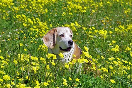 Ferienhäuser für Urlaub mit Hund in Massa Marittima
