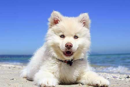 Ferienhäuser für Urlaub mit Hund in Orbetello