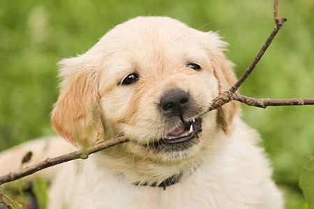 Ferienhäuser für Urlaub mit Hund in Volterra