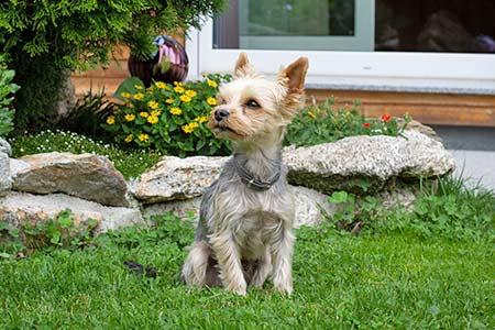 Ferienhäuser für Urlaub mit Hund in Grosseto