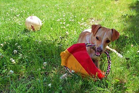 Ferienhäuser für Urlaub mit Hund in San Gimignano