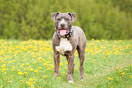 Ferienhäuser für Urlaub mit Hund im Mugello