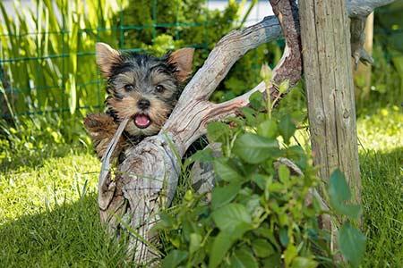 Ferienhäuser für Urlaub mit Hund in Montepulciano