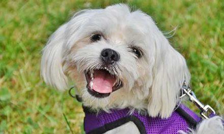 Ferienhäuser für Urlaub mit Hund in Asciano